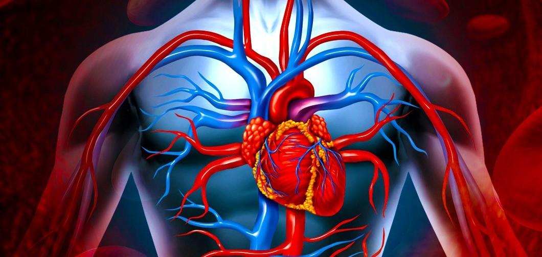 Влияние кукурузного зерна на сердце человека