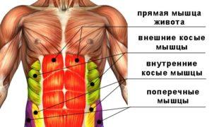 Брюшной пресс человека (прямая, внешняя и внутренние косые и поперечные мышцы)