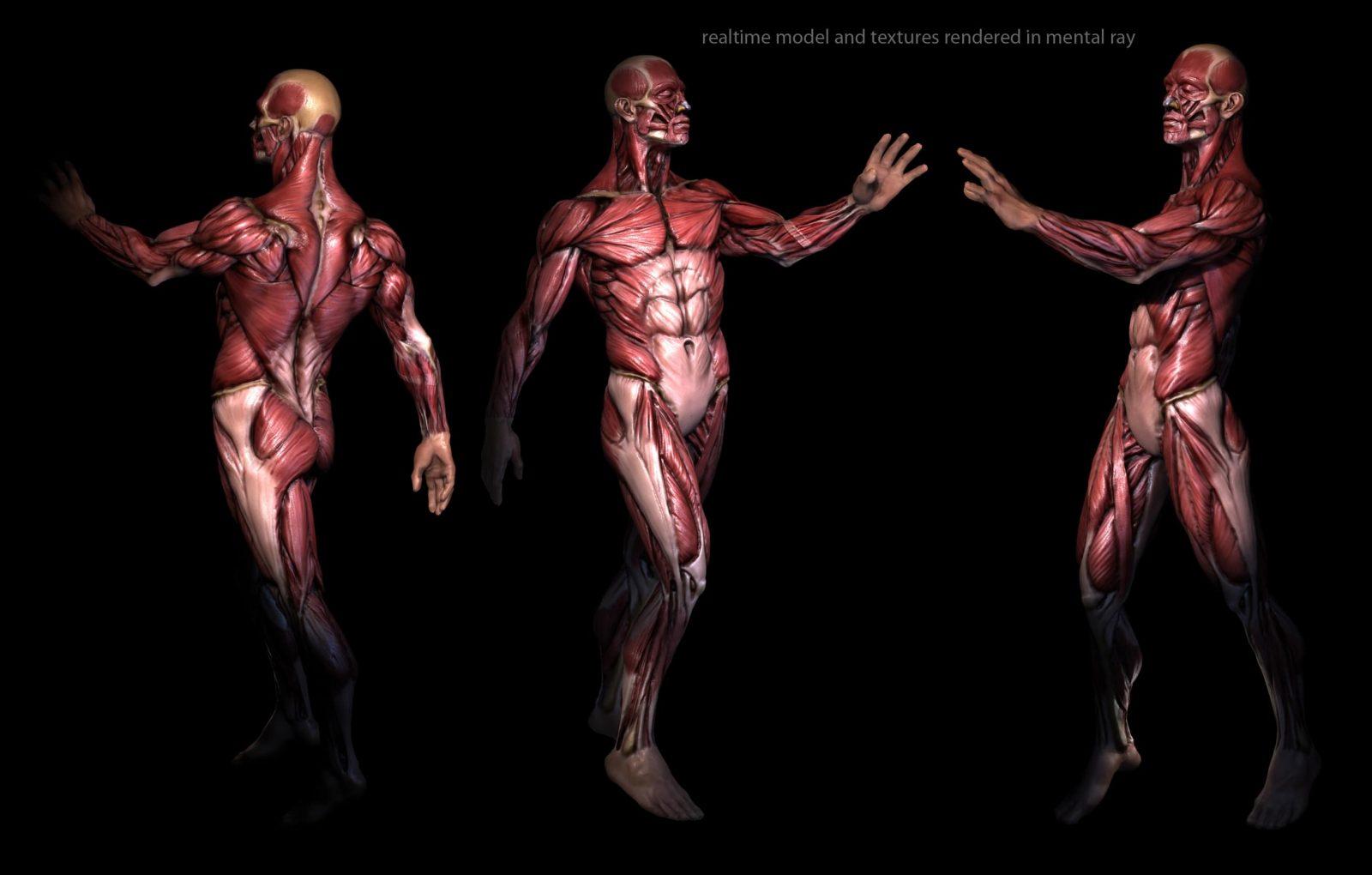Скелетные мышцы (фигура человека) на черном фоне