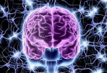 Мозг человека в фантастическом стиле