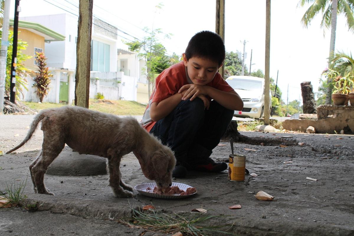Мальчик кормит бездомного щенка