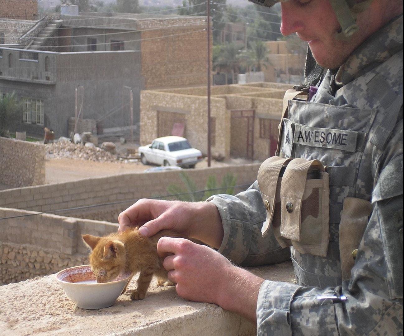 Солдат кормит бездомного рыжего котенка