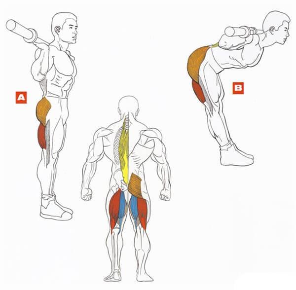 Схема работы мышц при упражнениях в картинках