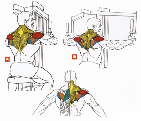 выбирают упражнения на задний пучок дельты в картинках тел или