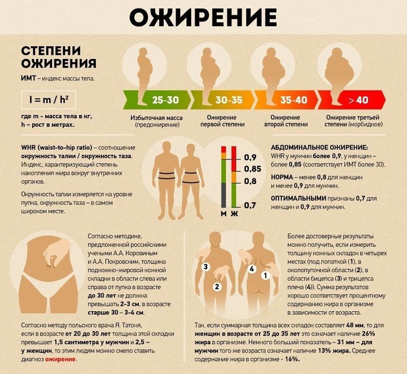 Измерение степени ожирения вокруг внутренних органах