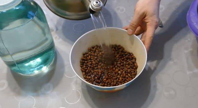 Заливаем кипятком кедровые орехи в скорлупе