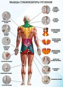 Анатомия: мышцы стабилизаторы регионов