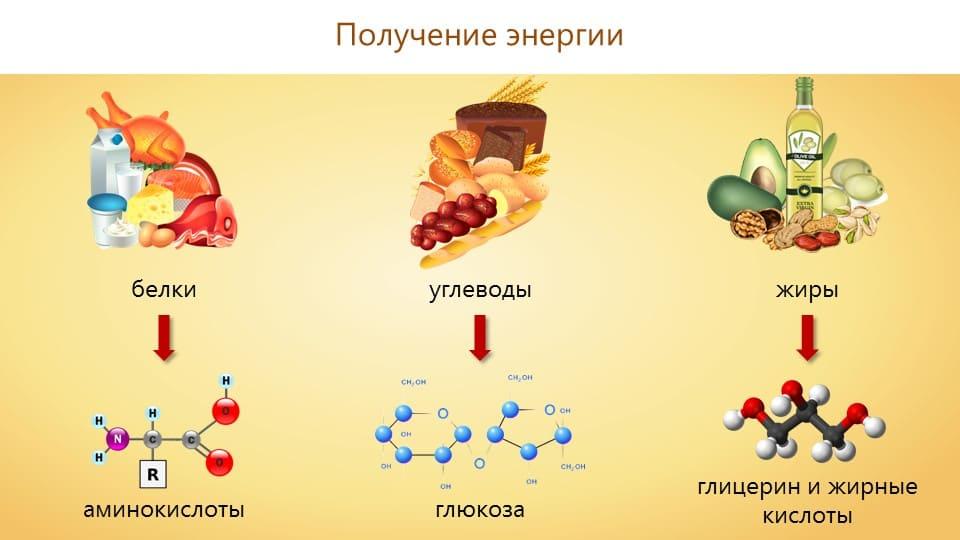 Получение энергии из белков, жиров и углеводов