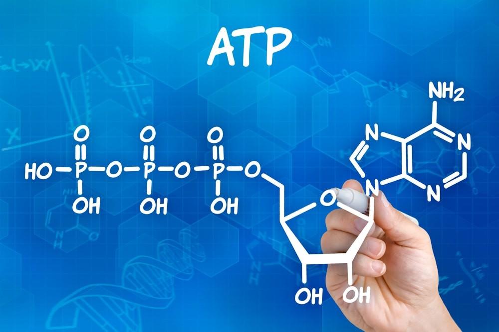 Структурная (молекулярная) формула Аденозинтрифосфорной кислоты (АТФ)