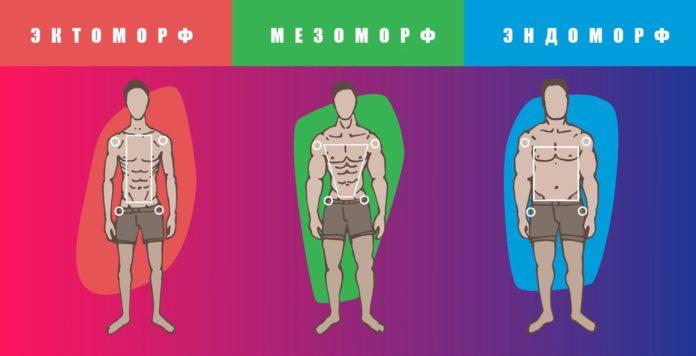 Типы телосложений мужчин: эктоморф, эндоморф, мезоморф