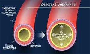 Действие аргинина на кровеносный сосуд