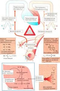 Влияние оксида азота на организм человека