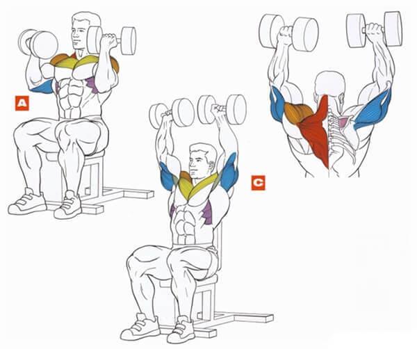Техника выполнения упражнения для плеч (дельт): жим Арнольда