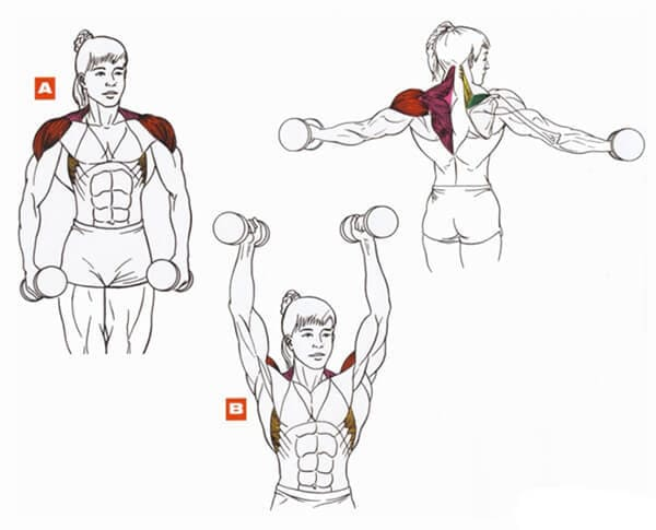 Техника выполнения упражнения на плечи (дельты): подъем гантелей через стороны