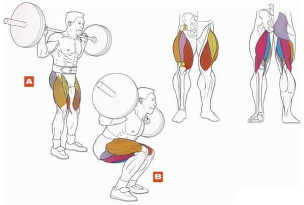 Техника выполнения упражнения для мышц ног: приседания со штангой на плечах