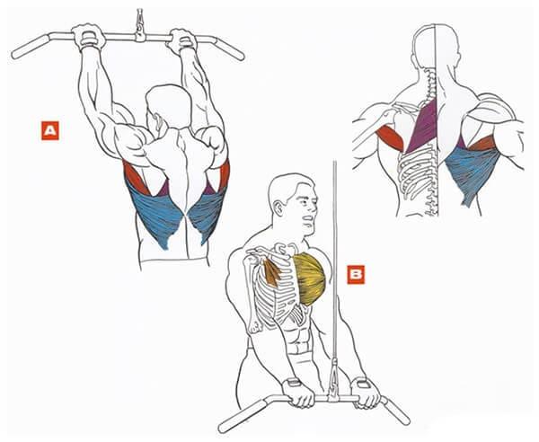 Техника выполнения упражнения для мышц спины: пуловер в блочном тренажере стоя
