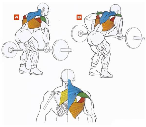 Техника выполнения упражнения для мышц спины: тяга штанги к поясу в наклоне