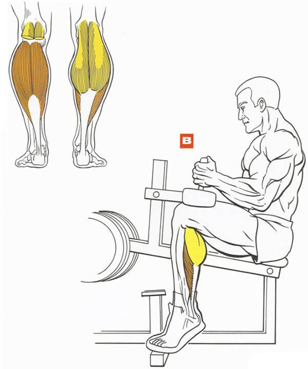 Техника выполнения упражнения для мышц ног: подъем на носки сидя