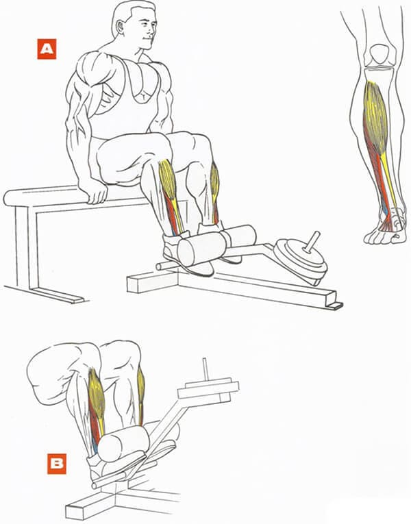 Техника выполнения упражнения для мышц ног: подъемы носков в тренажере