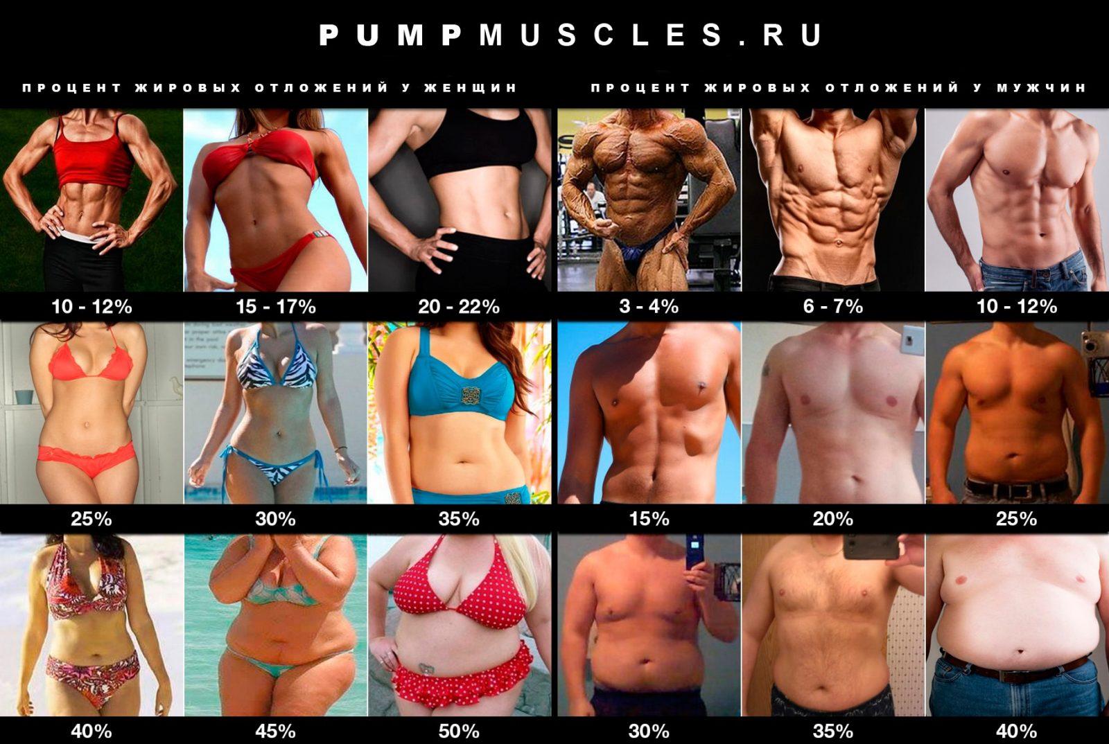 Мужчины и женщины в зависимости от процента жира в организме