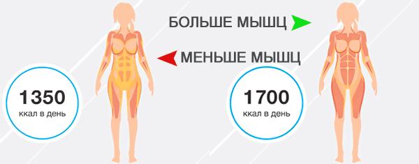 Обмен веществ в зависимости от размера мышц у женского пола