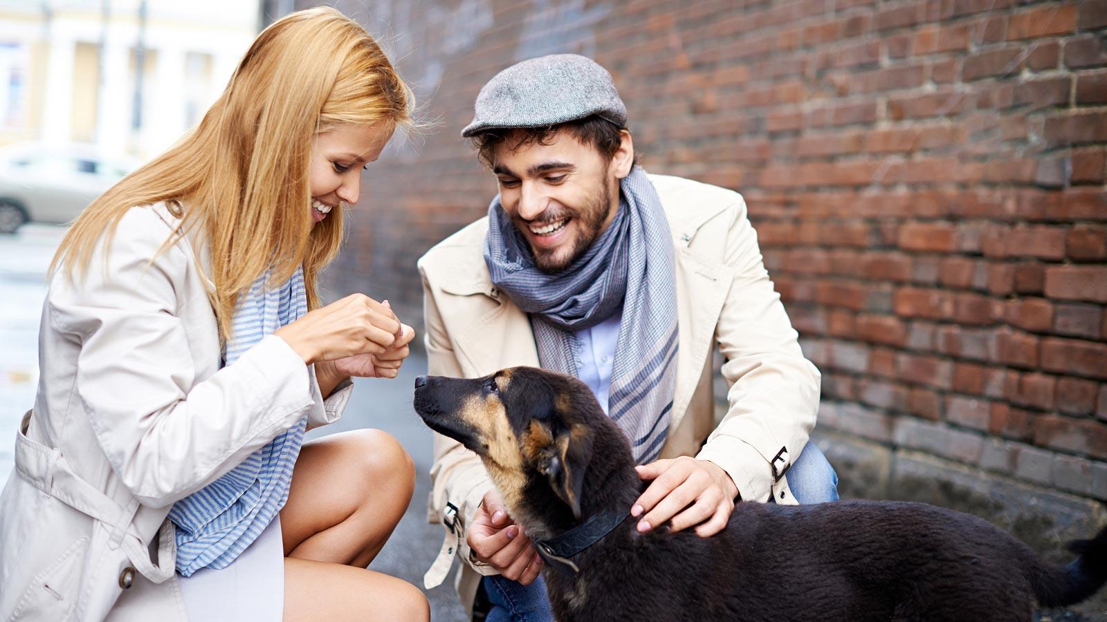 Парень с девушкой кормят бездомную собачку